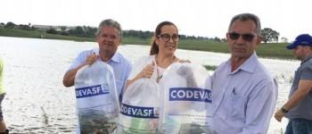 AÇÃO Prefeitura e Codevasf realizam peixamento com mais de 35 mil alevinos em Lagoa da Canoa